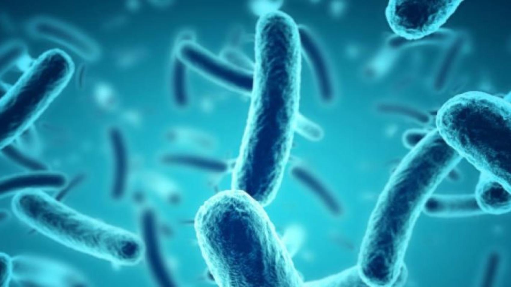 Microbioma e microbiota - Bromatech Milano