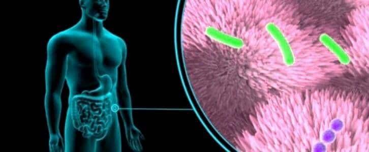 Batteri fisiologici selettivi ad azione probiotica nella gestione integrata della sindrome dell'intestino irritabile 2