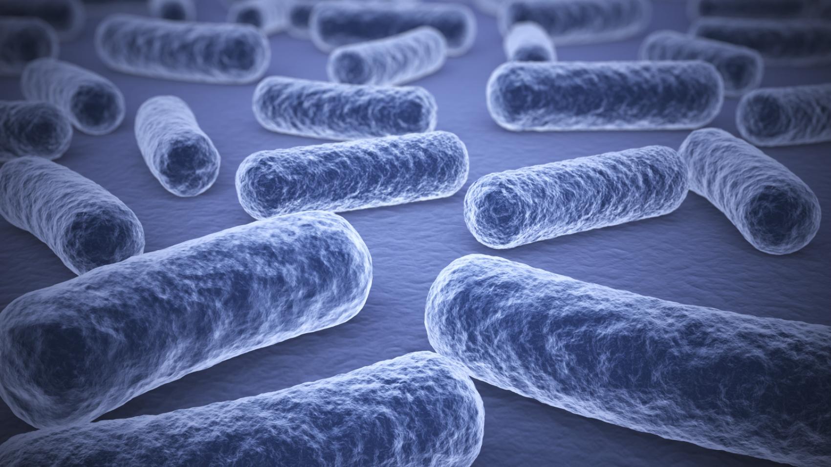 microbiota gastrico