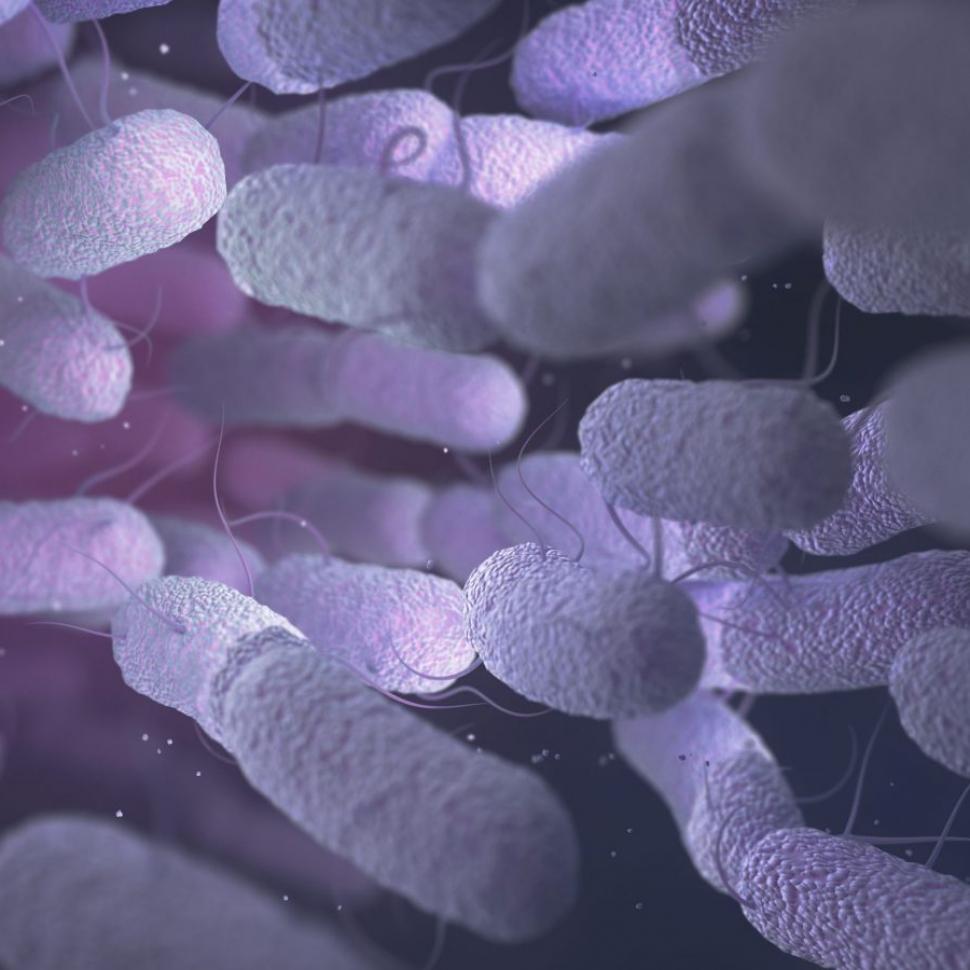 probiotici e prebiotici