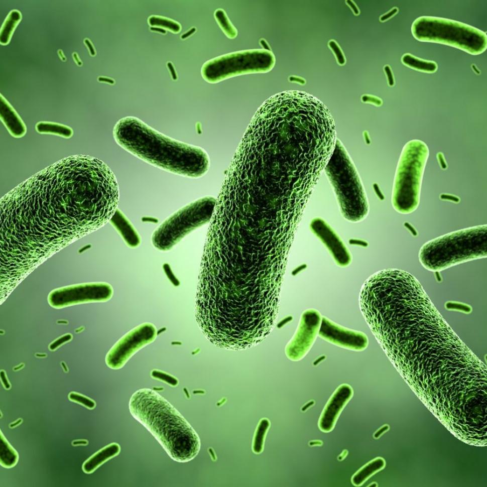 probiotici e difese immunitarie